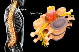 椎弓根固定手术